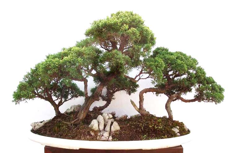 但在制作小,微型树石盆景时,因山石体量一般较小,又能独石成景,山石